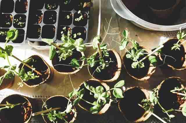 Plants for Indoor Gardening