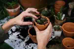 How to grow indoor garden