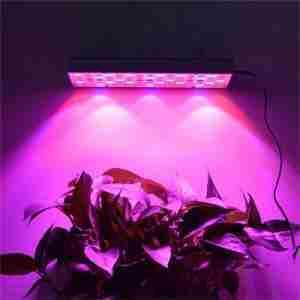 grow light setup