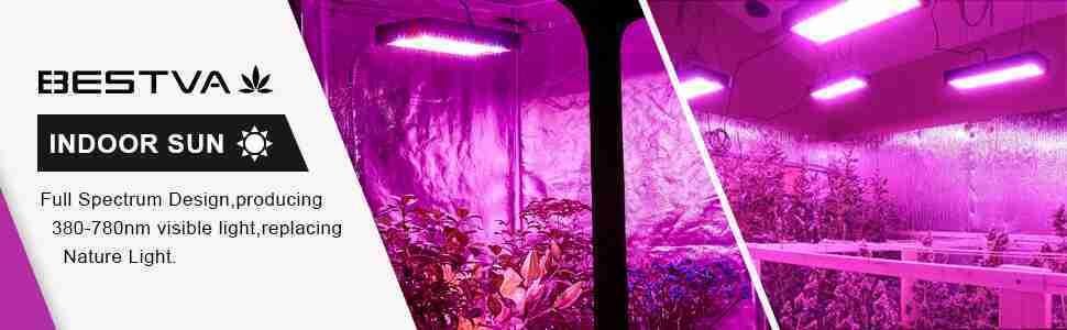 BESTVA 1000W LED Light