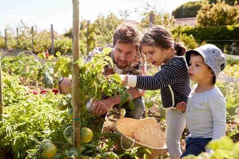 fruits garden