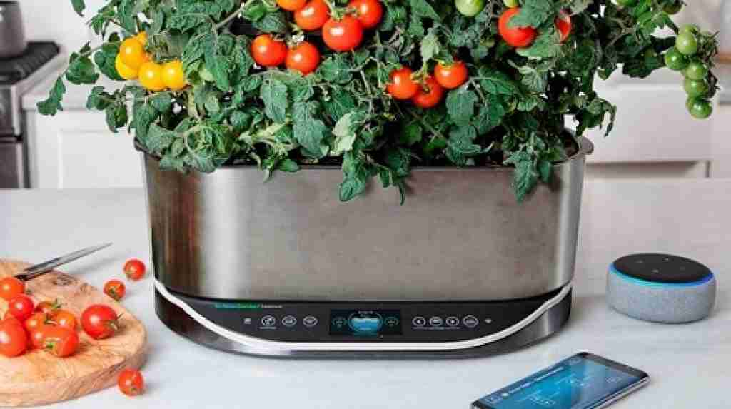 steps to Grow Tomatoes in the Aerogarden