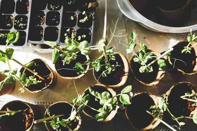 Plants for Indoor Gardening