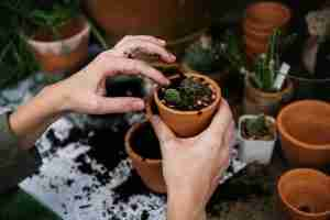 How to grow indoor garden