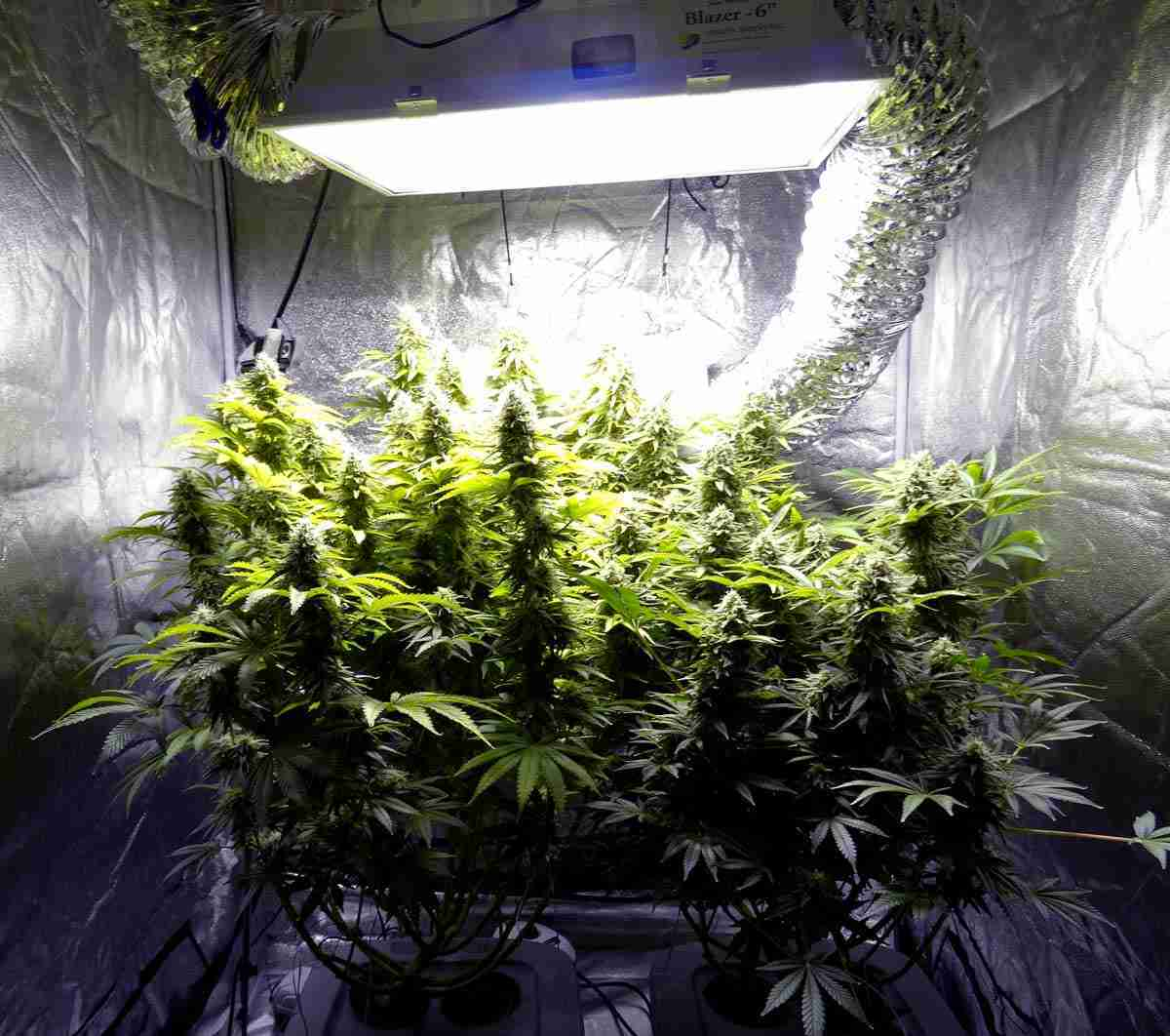 how to setup a grow tent
