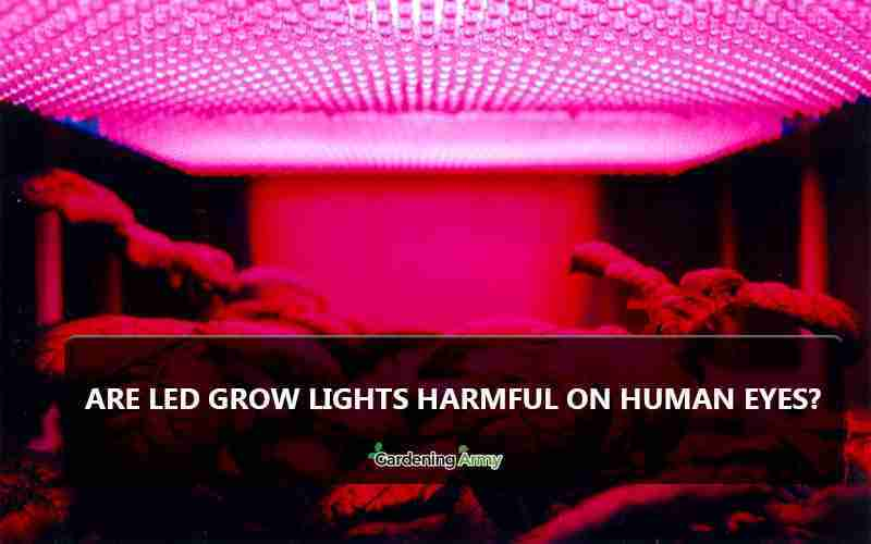 Are LED grow lights harmful to humans