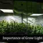 Importance of Indoor Grow Light