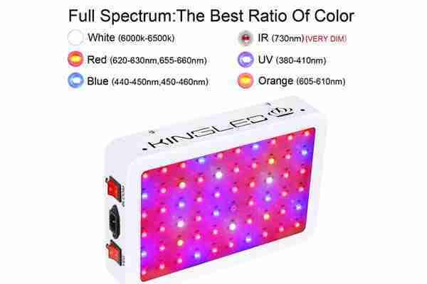 King Plus 600W Light Review