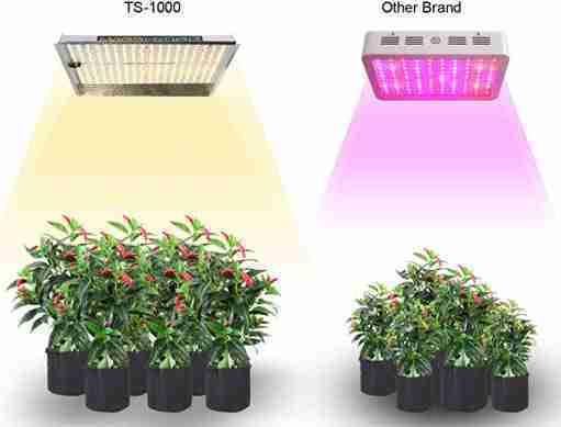 MARS HYDRO TS 1000W Led Grow Light