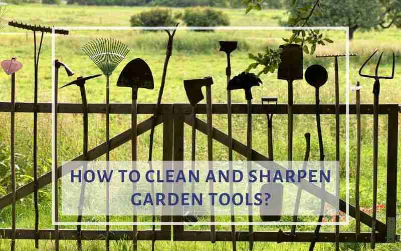 How To Clean And Sharpen Garden Tools Gardening Army
