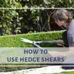 How to Use Hedge Shears