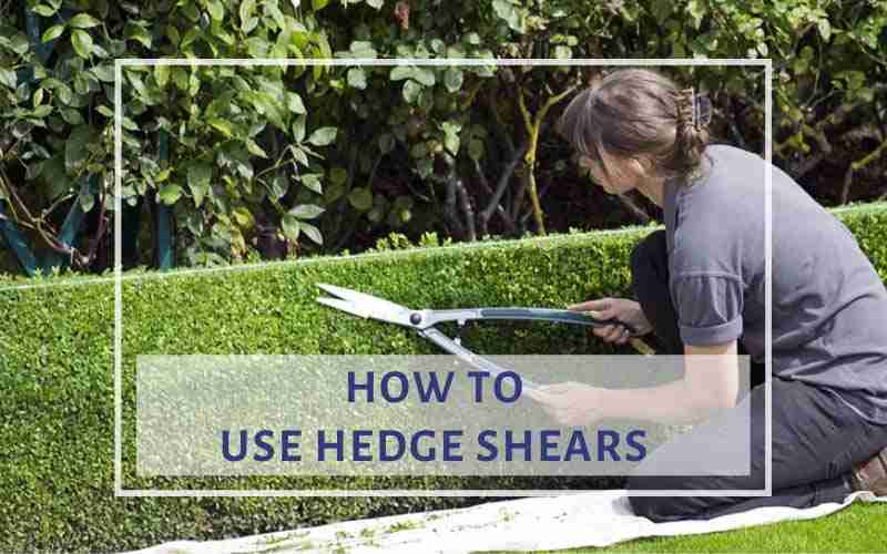 How to Use Hedge Shears