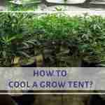 how to cool a grow tent?