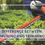 Difference between pruning and trimming