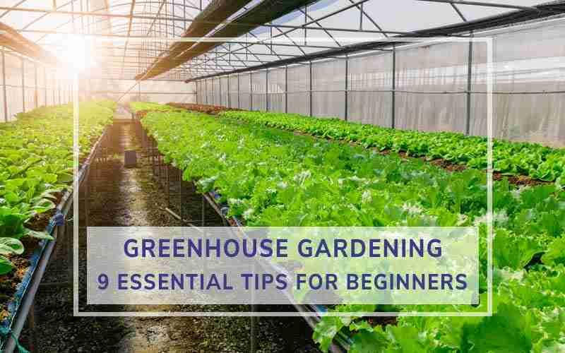 Greenhouse Gardening Tips