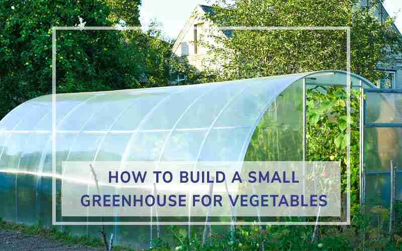 Build a Small Greenhouse for Vegetables