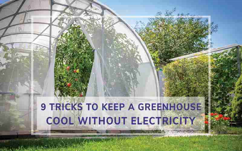 Keeping a Greenhouse Cool Without Electricity