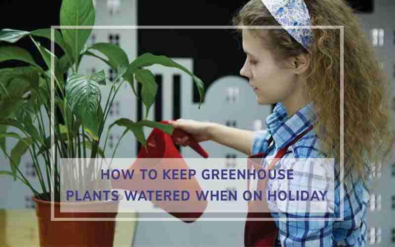 Keeping Greenhouse Plants Watered
