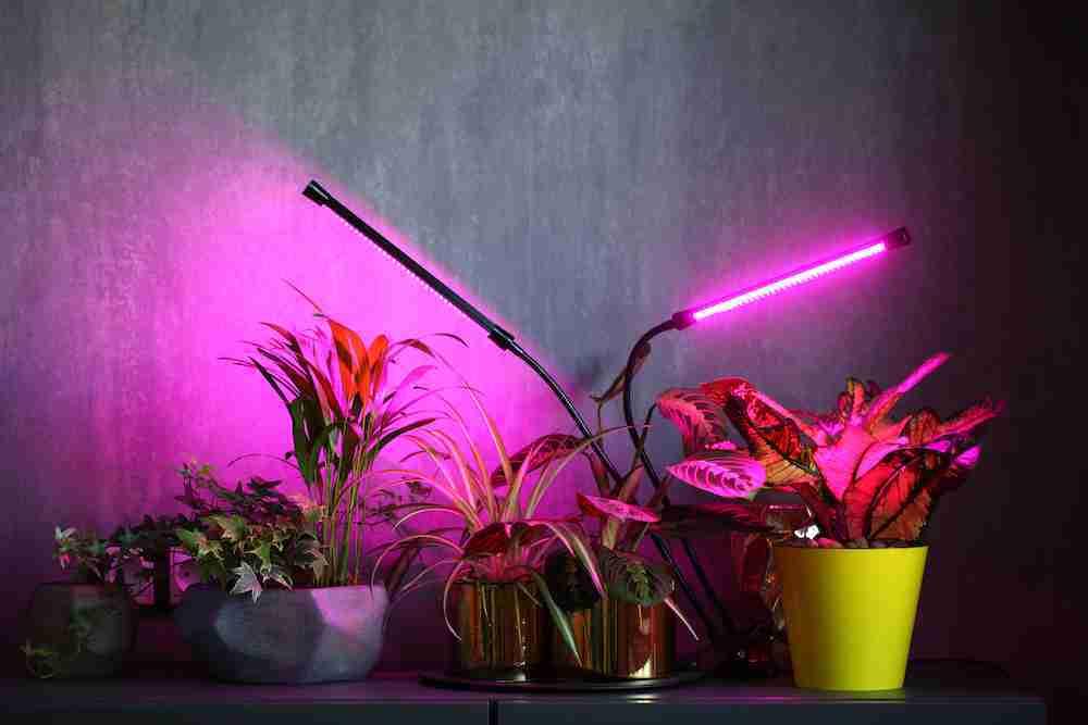 cheapest grow light setup