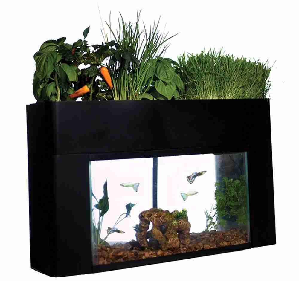 aquasprouts garden self sustaining desktop aquarium aquaponics ecosystem