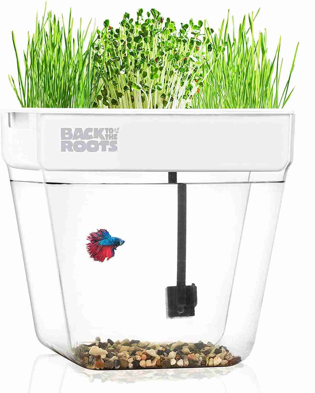 back to the roots fish tank isolated on white background