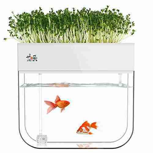 huamuyu hydroponic garden aquaponic fish tank plants growing system