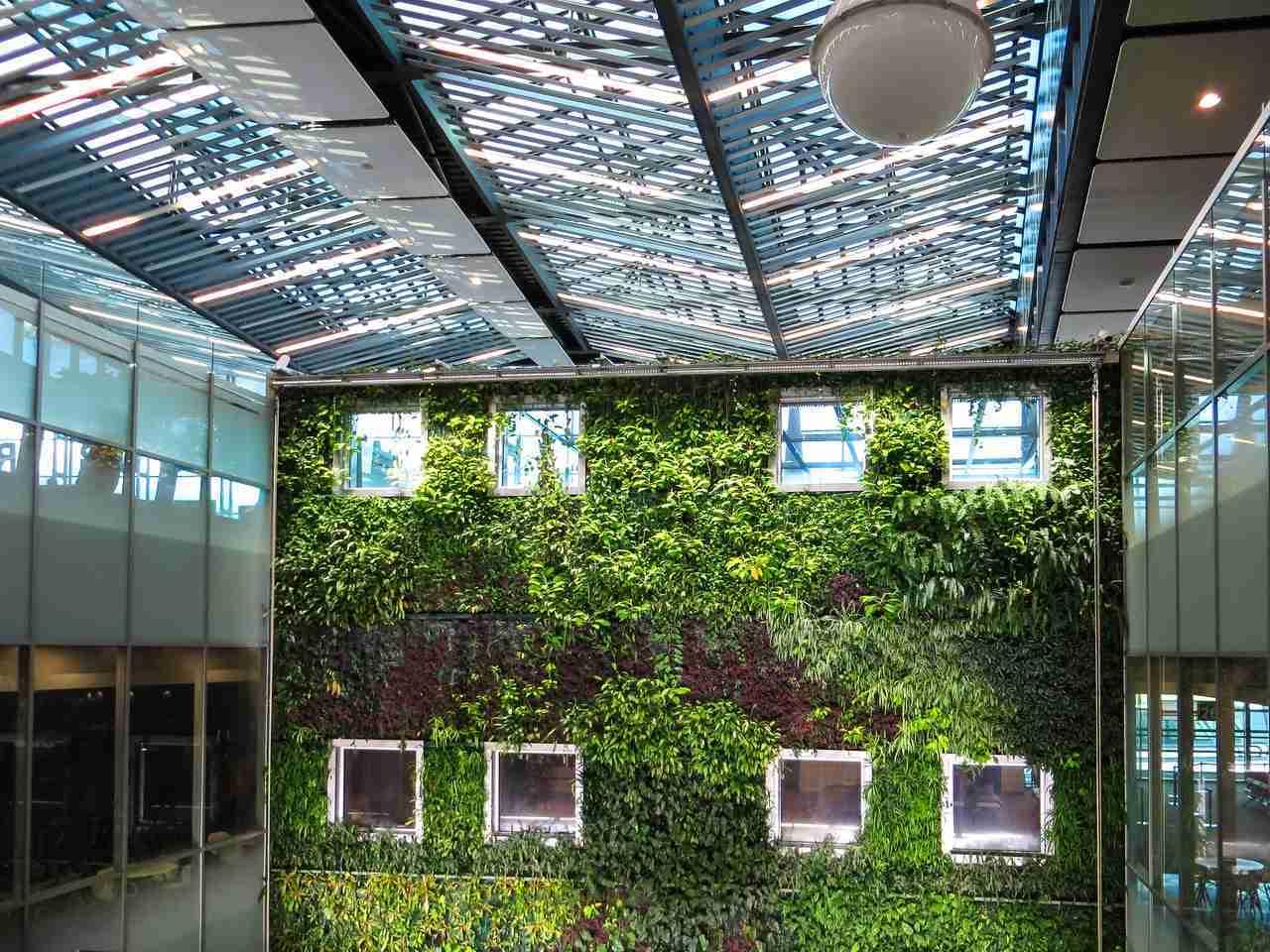 plants growing on wall indoor