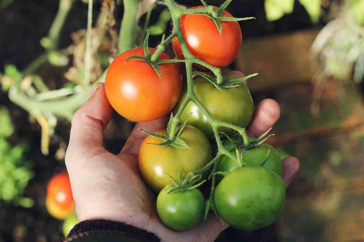 best vertical vegetable garden featured image